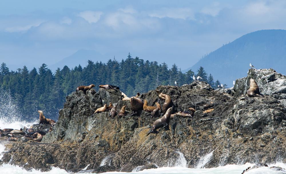 More sea lions!